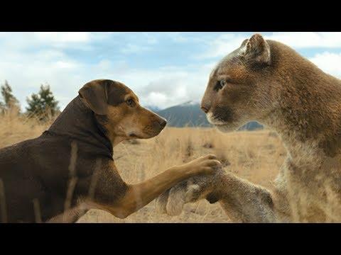母狗误把一只幼狮当孩子,养到最后比自己都大,一部温情动物电影