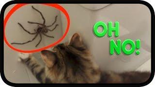 Huntsman Spider vs TWISTED Kittens