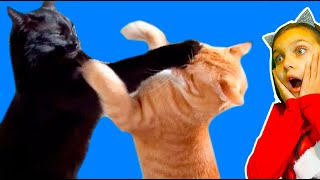 КОТЫ ДРАЧУНЫ ЛУЧШИЙ НЕ ЗАСМЕЙСЯ ЧЕЛЛЕНДЖ Funny Cats Dogs СОБАКИ Попробуй не засмеяться Валеришка