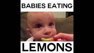Babies eating lemon