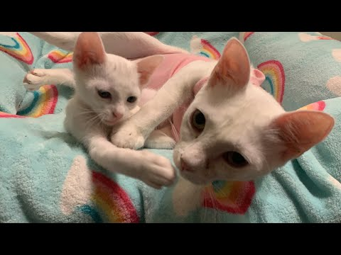 Kitten Looks Exactly Like Her Mom!