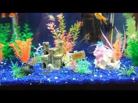 happy fish at play freshwater aquarium design ideas 10 gallon led - Freshwater Aquarium Design Ideas