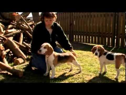 Beagle TIER TV