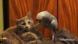 РЖАЧ!!!попугай и кот!