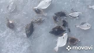Рыбалка Амурский залив Тавричанка