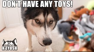 Told My Husky To DONATE His TOYS! He Argues About it!