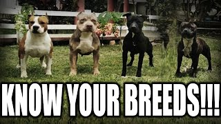 WHAT KIND OF 'PITBULL' DO YOU HAVE??  A QUICK BREAKDOWN OF THE PIT TYPE BREEDS