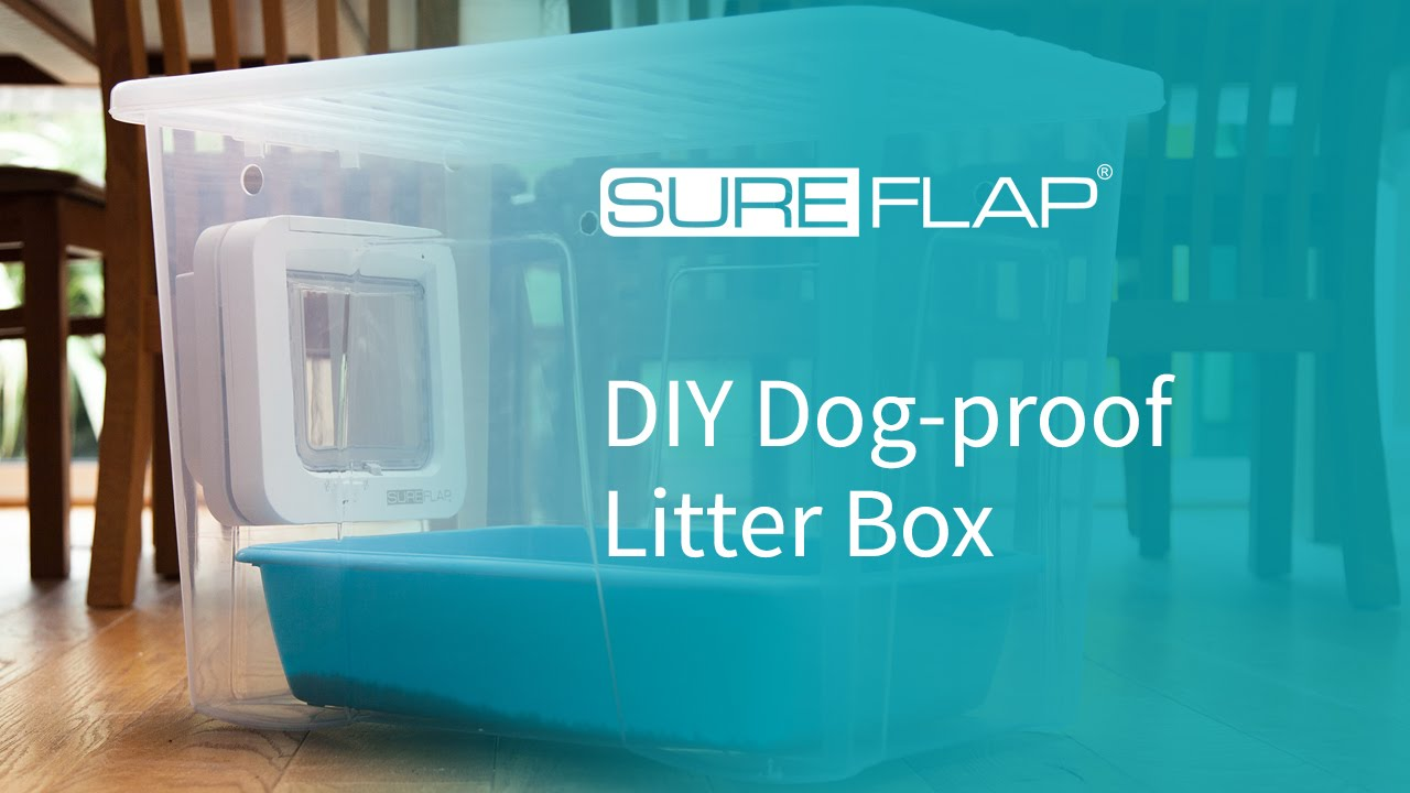 how to build an outdoor dog litter box
