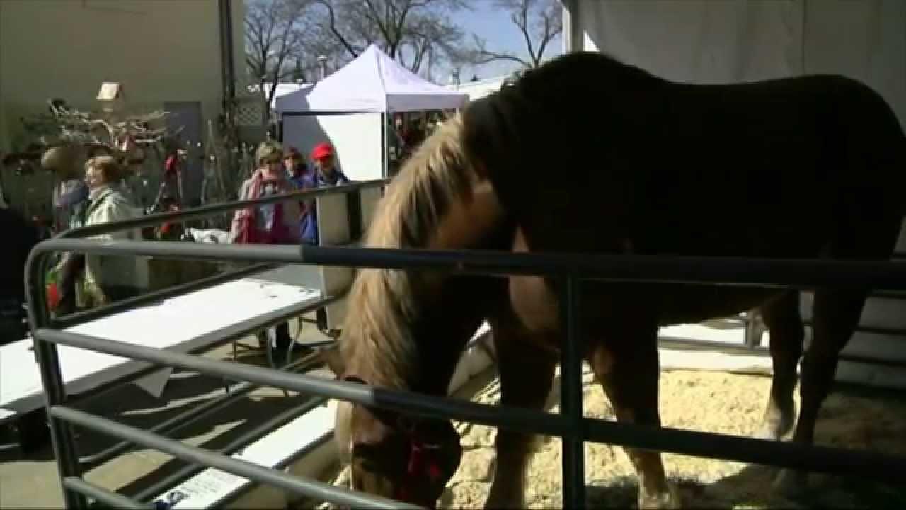 le plus grand cheval et le plus grand ne du monde r unis pour une foire youtube. Black Bedroom Furniture Sets. Home Design Ideas
