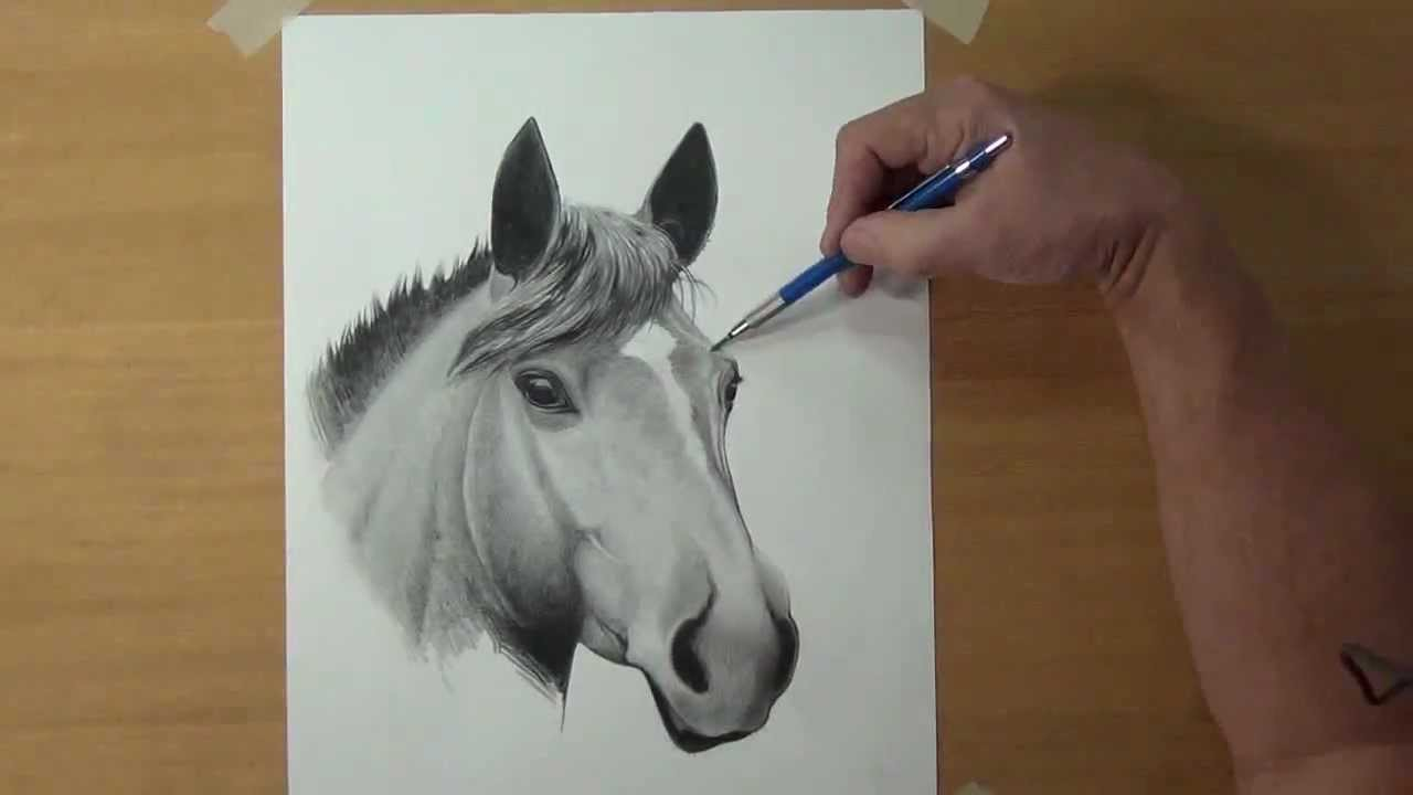 How To Draw A Horse Part 2 {time Lapse}