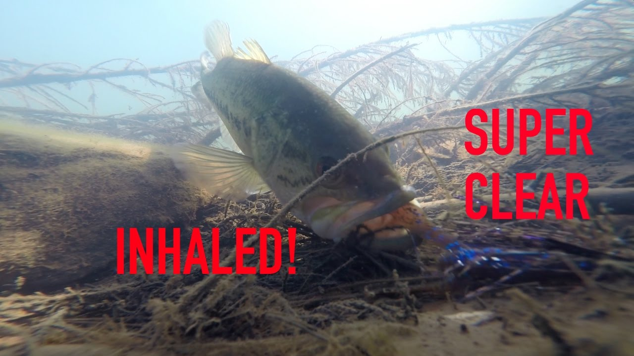 Insane underwater bass fishing footage super clear bed for Bed fishing for bass