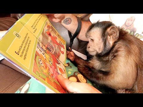 Monkey Mail Time! VEGEMITE CHALLENGE!