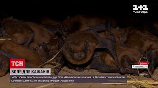 Новини світу: в Івано-Франківську випустили на волю понад 200 червонокнижних кажанів