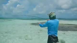 Літати риболовля Бонфіш & Фдж мух