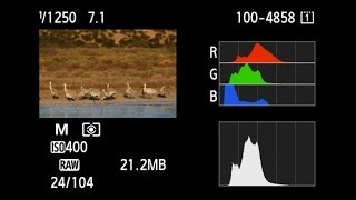 Canon: Bird Photography with Arthur Morris: Getting the right exposure