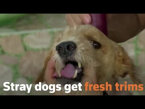 Thai stray dogs get free haircuts as shutdown eases