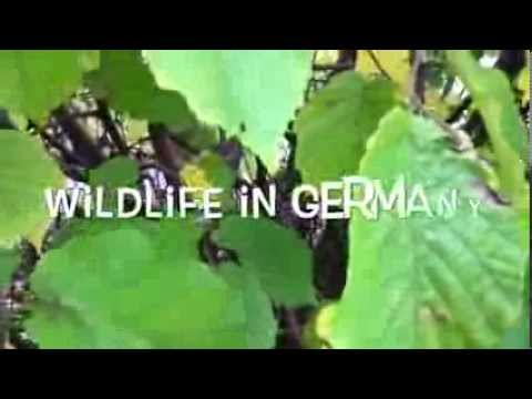 -Wildlife in Germany- :D