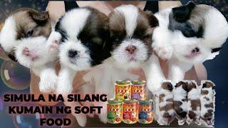 UNTI - UNTING PAGWAWALAY NG TUTA || SIMULA NANG  KUMAIN NG SOFT FOOD screenshot 2