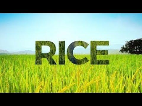 Rice Exchange