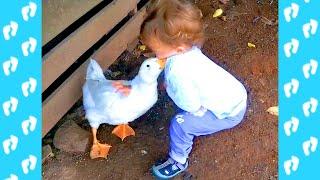 Es peligroso mirar Puedes morir de risa 2019 - Niños y animales en el zoológico se divierten juntos