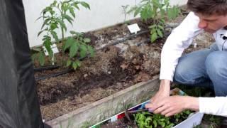 Посев салата в открытый грунт.  Все о выращивании салата