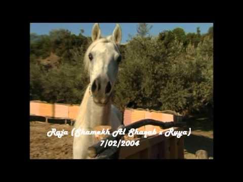 Εκπαίδευση αλόγων, Kokkas Arabians