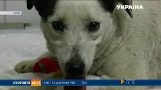 У Сумах масово труять собак