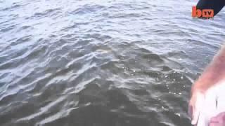 Видео   Рыбаки помогли скату родить   Видеоролики на Sibnet
