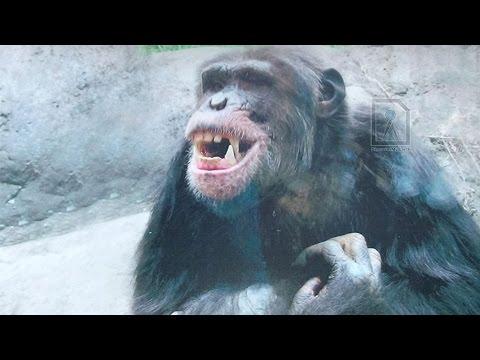 Best of Alipore Zoological Gardens, Kolkata