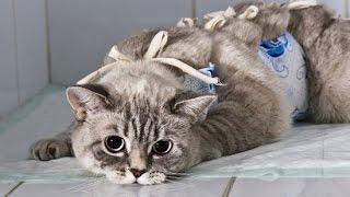 Повезли кошку на стерилизацию
