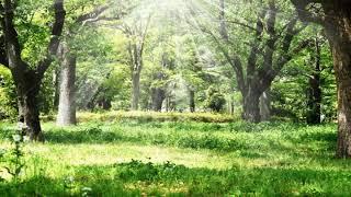 ふっと思い浮かんだメロディーを曲にしていきました。 緑豊かな大地がどこまでも広がっていく風景をイメージしながら、演奏を行いました。...