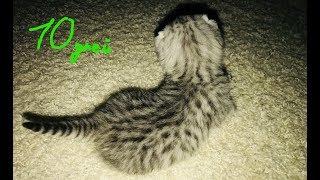 Что умеют котята  в 10 дней!