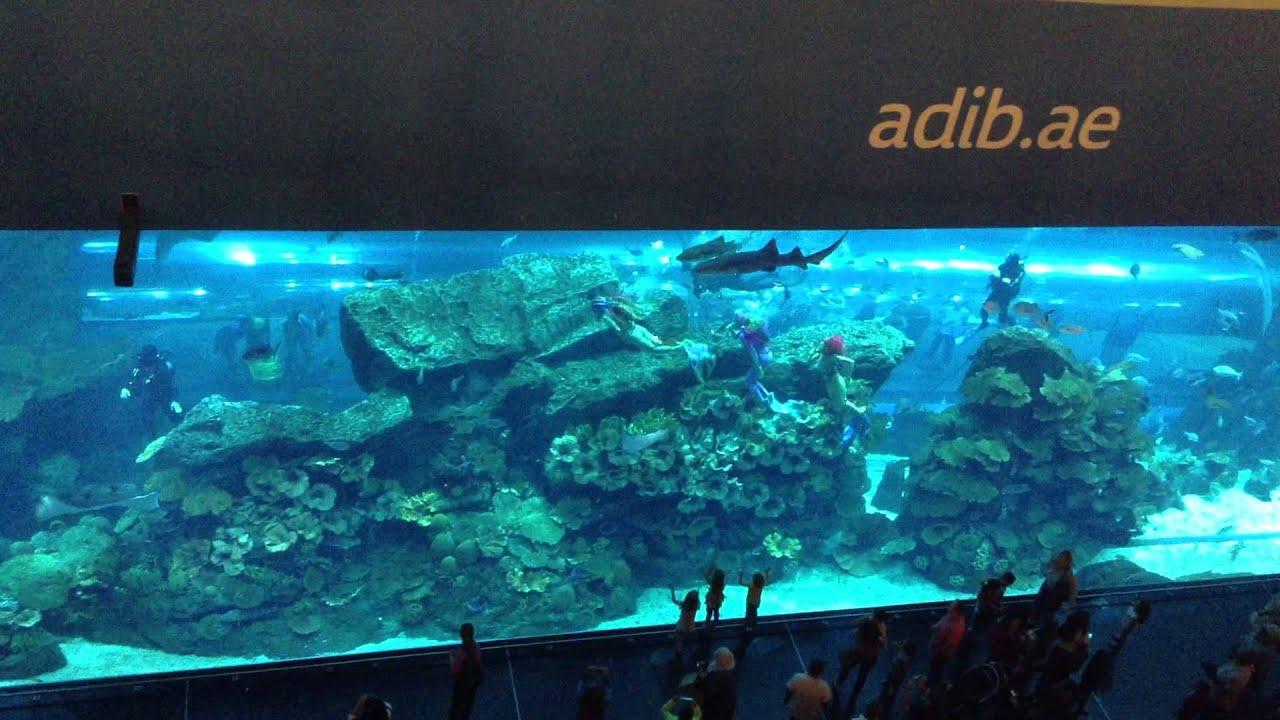 Freshwater Aquarium Fish In Dubai - Dubai akvarium