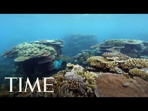 Extreme Heatwaves Killed Half Of The Great Barrier Reef's Coral In 2 Years, Study Says | TIME