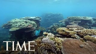 Extreme Heatwaves Killed Half Of The Great Barrier Reef