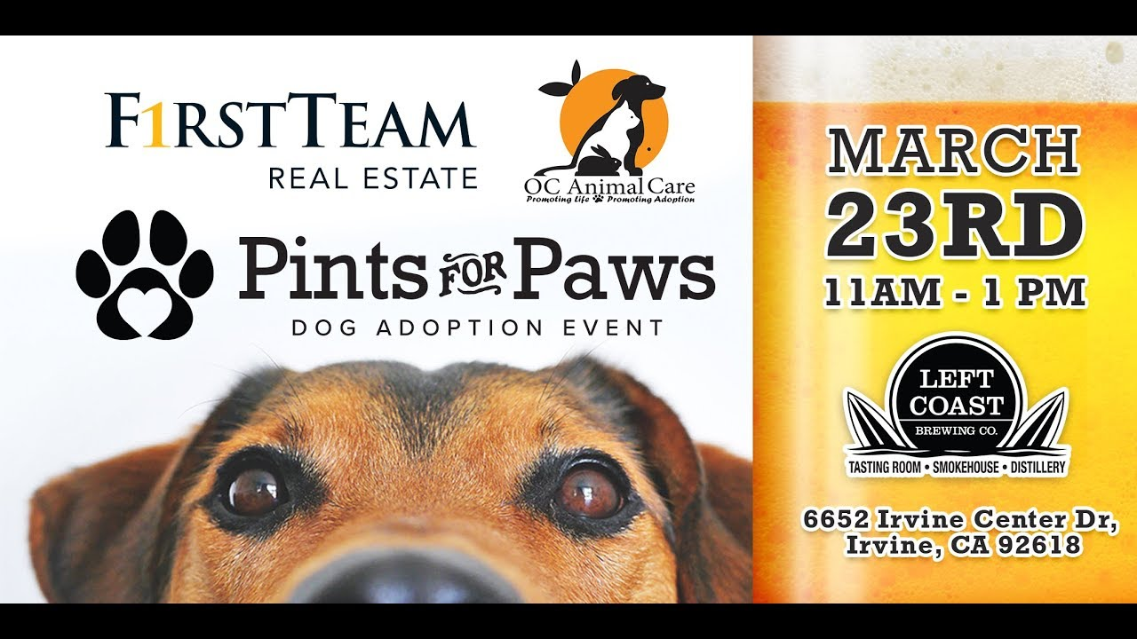 Foster a dog, receive free beer