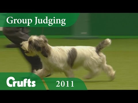 Petit Basset Griffon Vendeen wins Hound Judging at Crufts 2011 | Crufts Dog Show