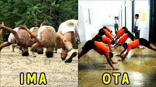 Major Differences in IMA and OTA - Indian Military Academy vs Officers Training Academy