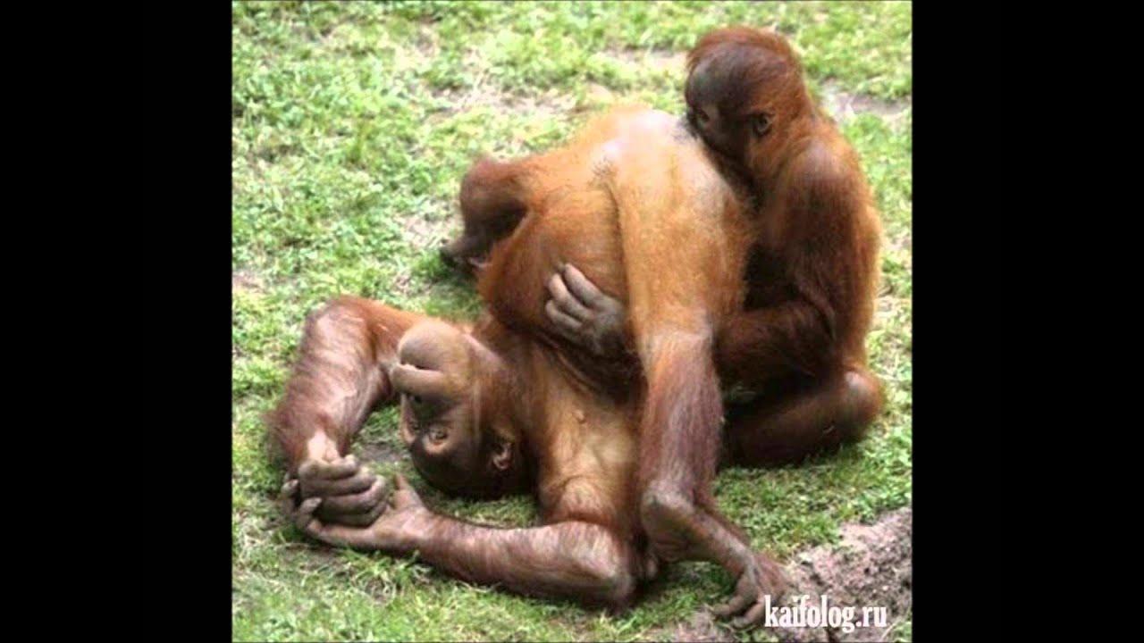 Смотреть онлайн порно обезьяна с человеком