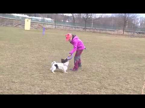Aníí, Key a první závod Dog Puller v ČR - Jumping