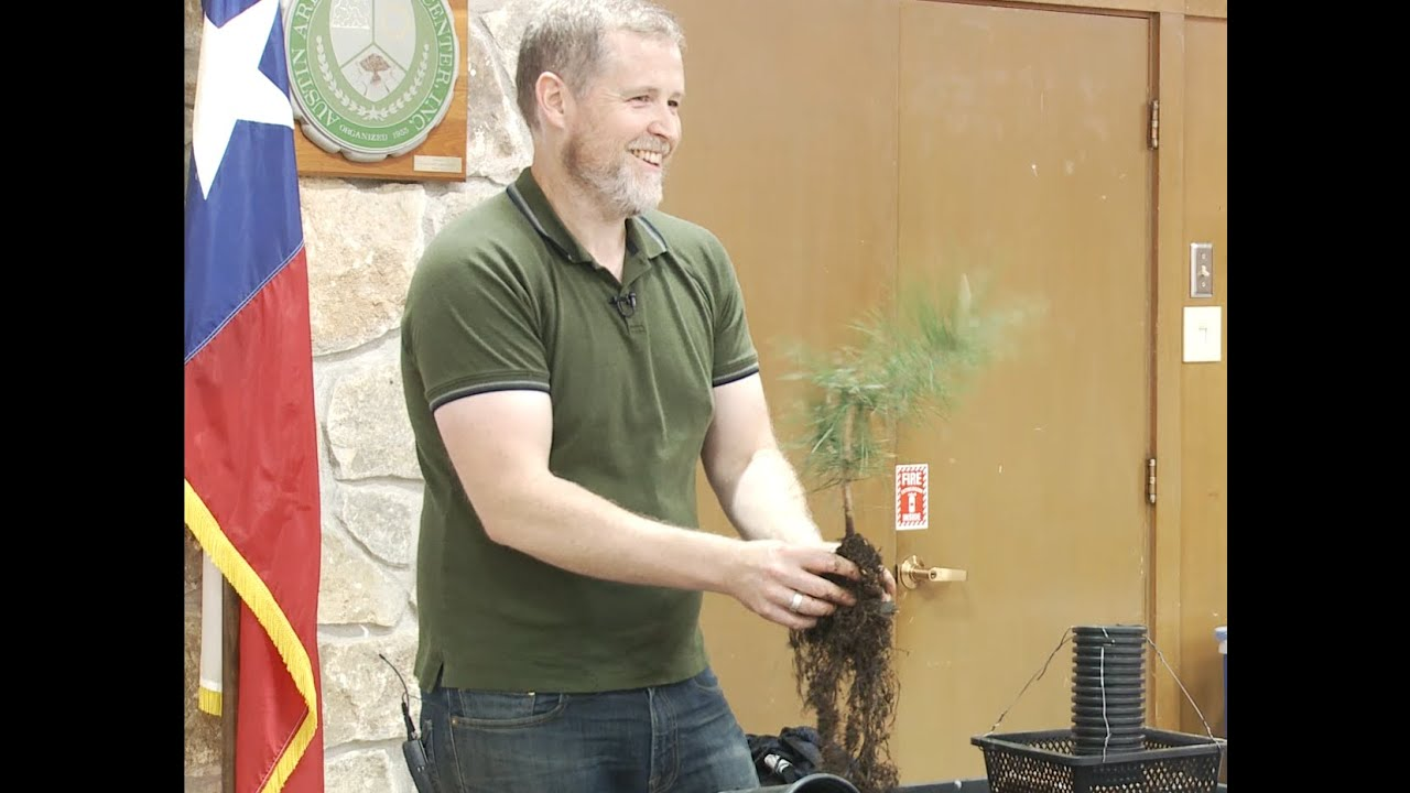 Exposed Root Japanese Black Pine Bonsai Eric Schrader With Austin Bonsai Society March 2020 Youtube