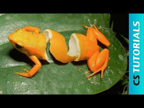 Orange Frog Peel - Photo Manipulation Tutorial (#Photoshop)   CreativeStation