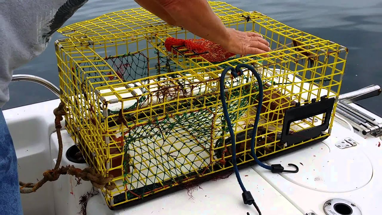How a Lobster trap works - YouTube