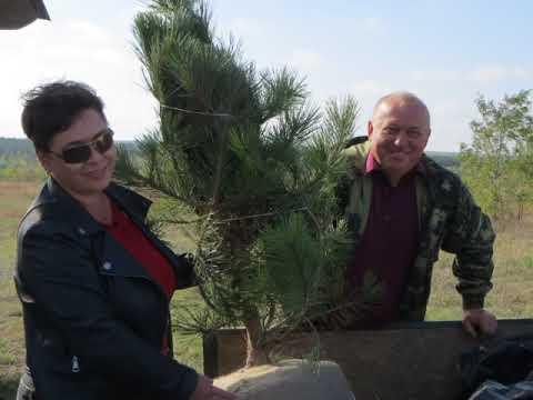 ТВ-Бердянск: Новорічні ялинки