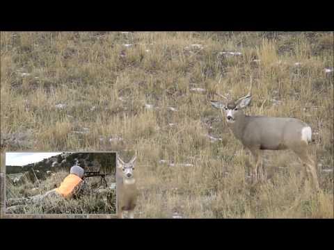 Montana Mule Deer Hunt 2017: Thanksgiving Mulies