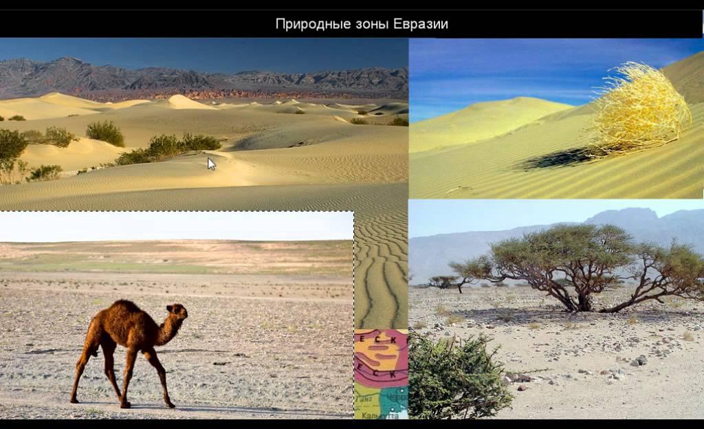 304  Природные зоны Евразии
