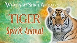 Tiger Spirit Animal | Tiger Totem & Power Animal | Tiger Symbolism & Meanings