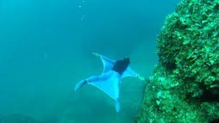 Freediver creates underwater wingsuit