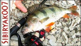 КРУПНЫЙ окунь!.. Рыбалка на отводной поводок, ловля окуня на спиннинг SLrods Lex 792M