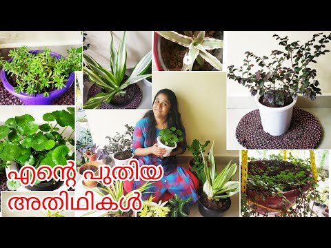 My new plants and pots | Garden Shopping